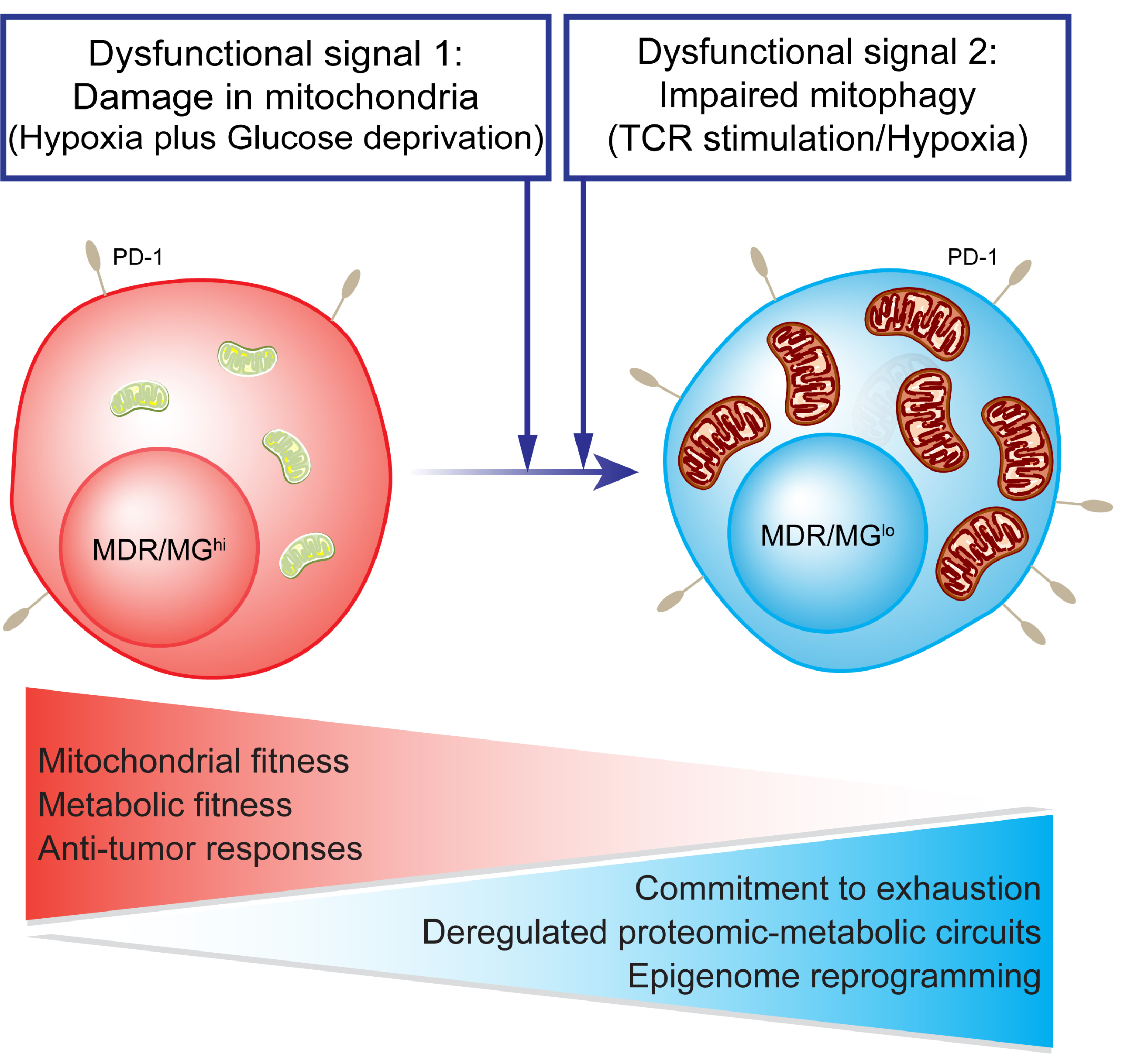 https://www.medical-epigenomics.org/papers/Yu2020/img/1_Tcells_exhaustion_overview-01.jpg
